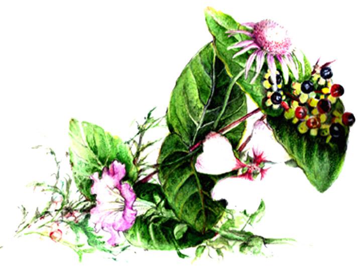 trois générations en forme de fleurs 22x14,5cm Aquarell