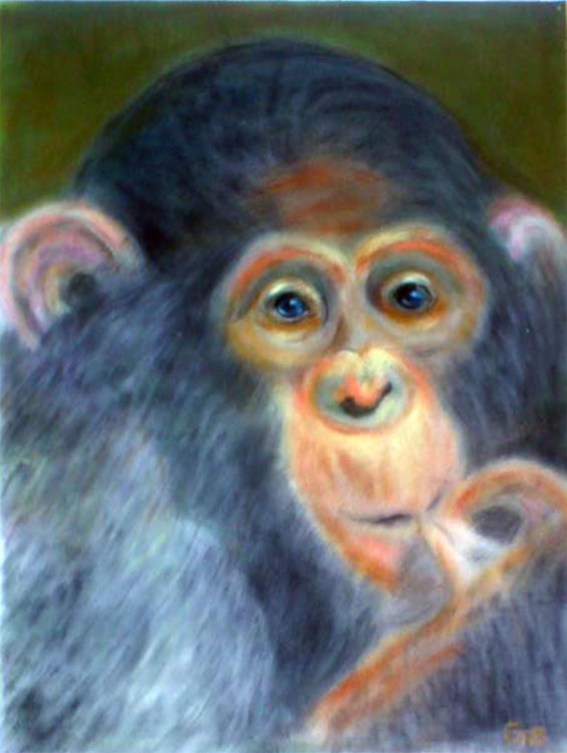 Kongolesischer Gorilla 40x30cm Pastellkreide